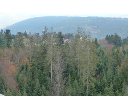 2019 Stutensee-Karlsdorf81
